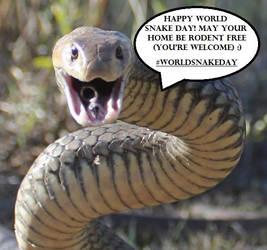Happy #WorldSnakeDay :) by SnakeOutBrisbane