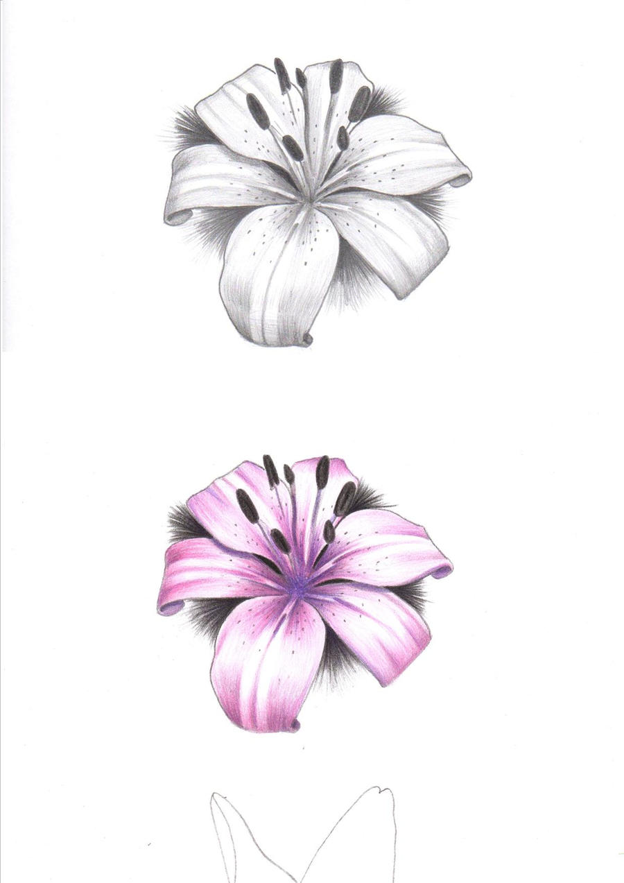 black_and_grey_tiger_lily___pink_tiger_lily_tattoo_by ...