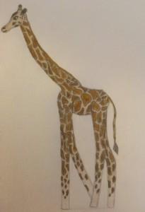 theTallGiraffe's Profile Picture