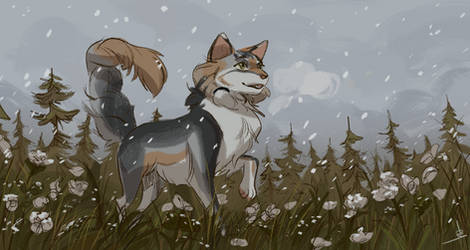 Commission I First Snow