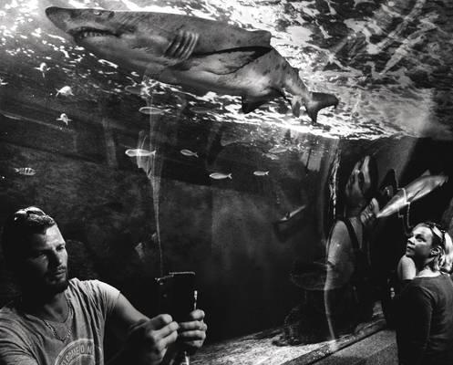 A Surreal Shark Walks Into A Room