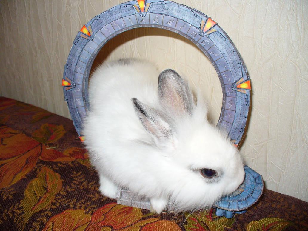 my rabbit from StarGate