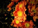 Flowers of Faith