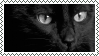 Black Cat Stamp ( And Other Colors) by cc-10470