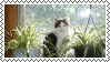 Window Cat With Plants Stamp by cc-10470