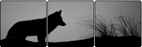 Wolf Page Divider by cc-10470