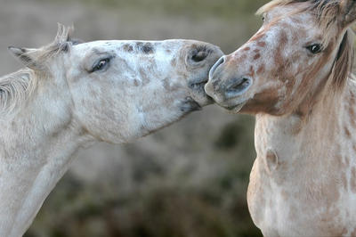 Nickering Kisses by quicksilver1212