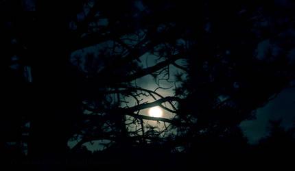 Arboreal Moonlight