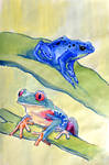 Two frogs by Neivan-IV
