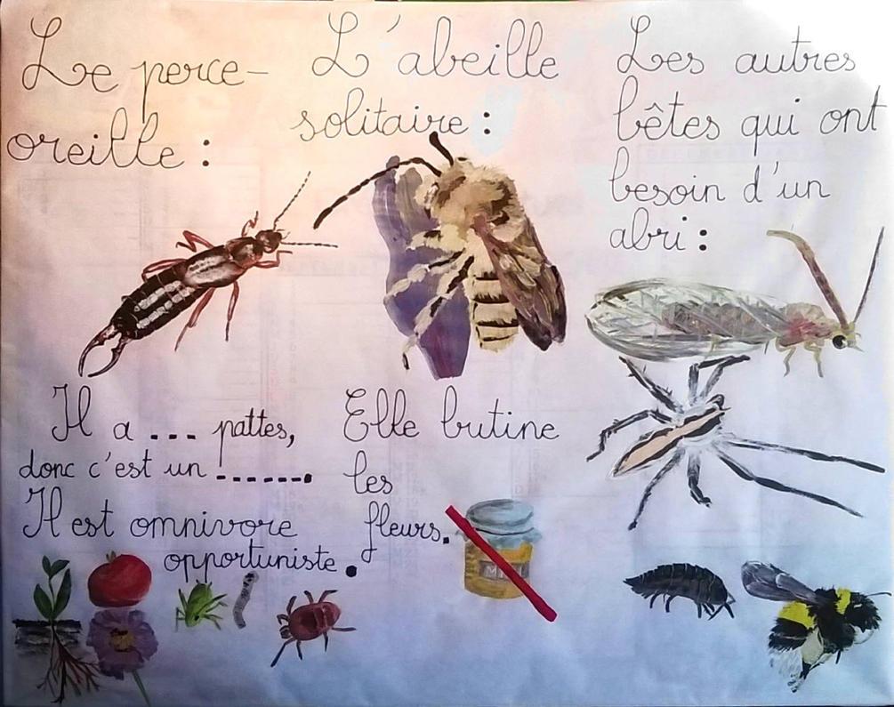 Les animaux auxiliaires du jardin by edelweisscreations on - Les animaux du jardin ...