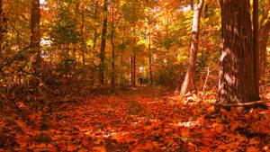 A walk in the woods by shaynaJreddick