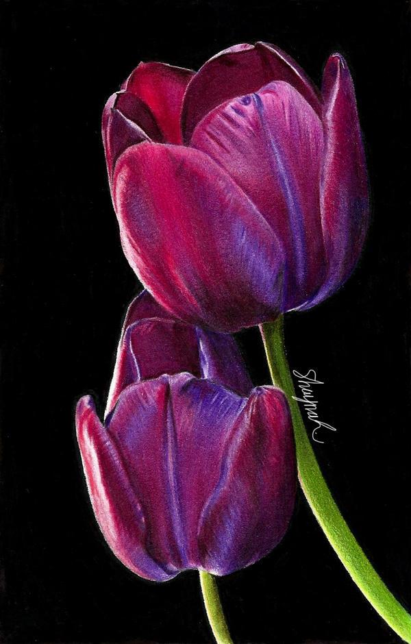 tulips drawing by shaynajreddick