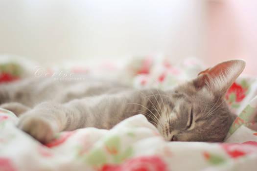 Sleep little darling,