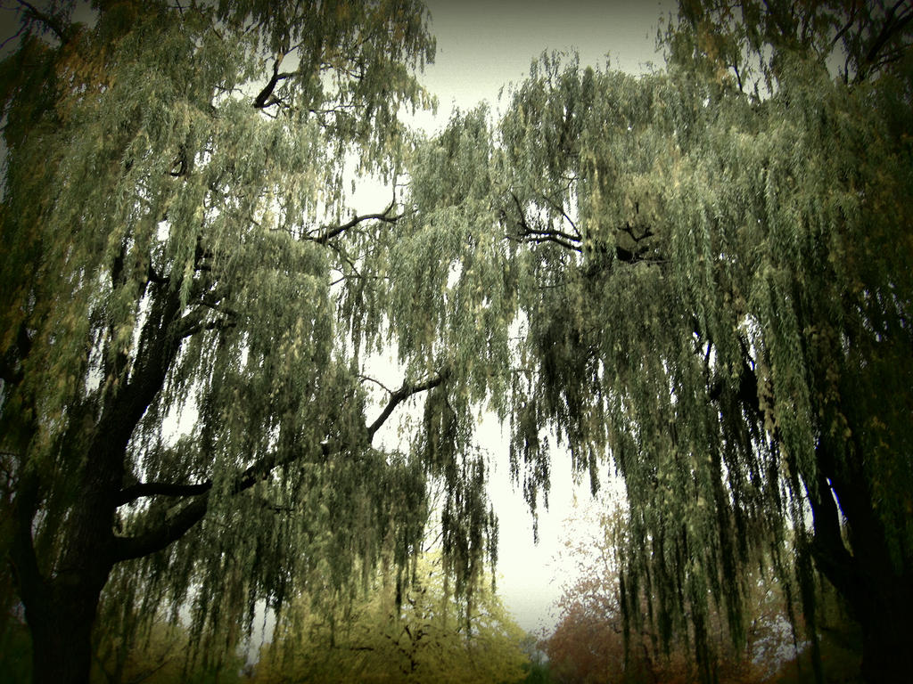 Descending Leaves by GirlinTranslation