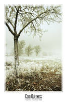 Cold Quietness