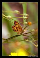 Butterfly by kil1k