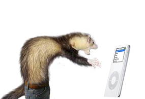 Ferret Pants by A-E-S-H-A-E-T-T-R