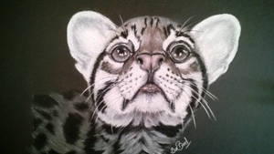 ocelot pastel pencil drawing by donnabe
