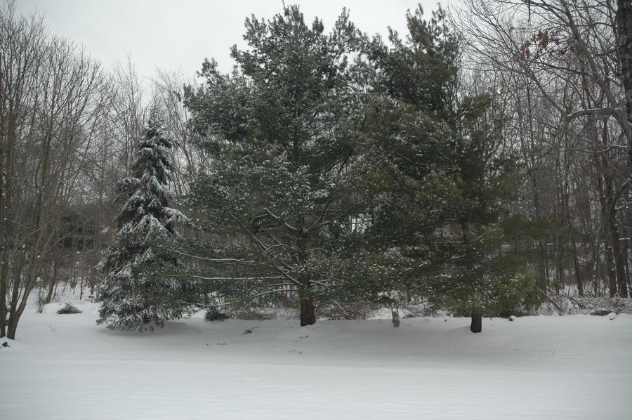 Birthday Snow by Gryffgirl