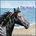 Marraparra Cont. Avatar by mrbun26