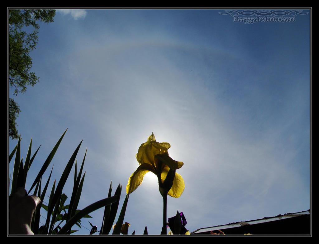 2010.06.06 Tangent Arc Iris