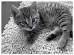 Minki Blue Eyes