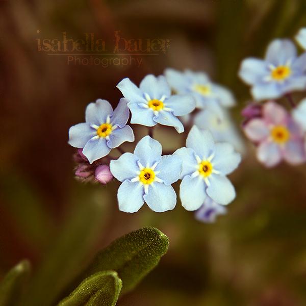 Vintage Blue by little-billie