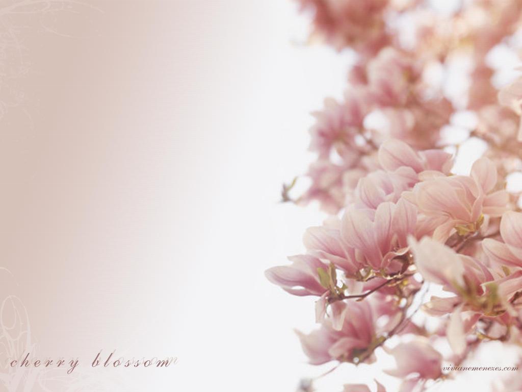 Cherry Blossom by snawmana