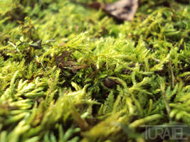 Mossy Ground by Turaiel