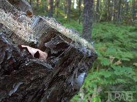 Stump and Fungi by Turaiel