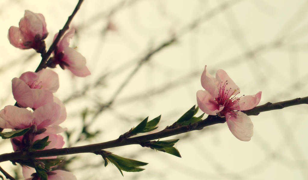 beginning of the spring beauty2