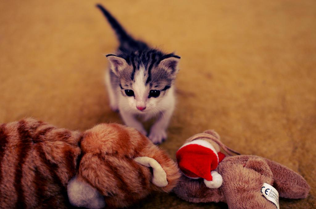 my toy's
