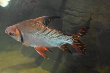 Fish 1 Stock by AmandaKulpStock