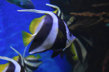 Fish 4 Stock by AmandaKulpStock