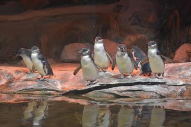 Penguins 1 Stock by AmandaKulpStock