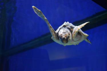 Turtle Stock by AmandaKulpStock