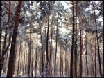 Winter in the forest-2010_III