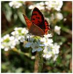Butterfly (2020) II