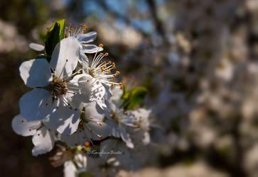 Spring (2021) III