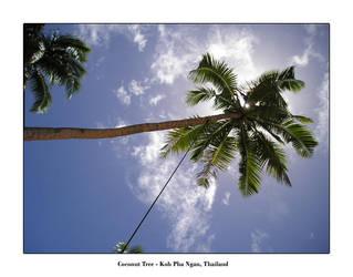 Coconut Tree by kieranishere