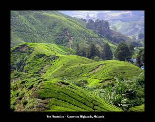 Tea Plantation by kieranishere