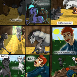 The Real Life Of Horses - Part 2