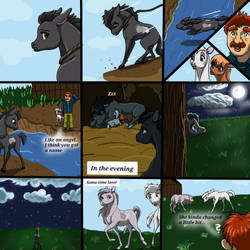The Real Life Of Horses - Part 3
