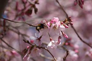 macro bee by hamptonboss