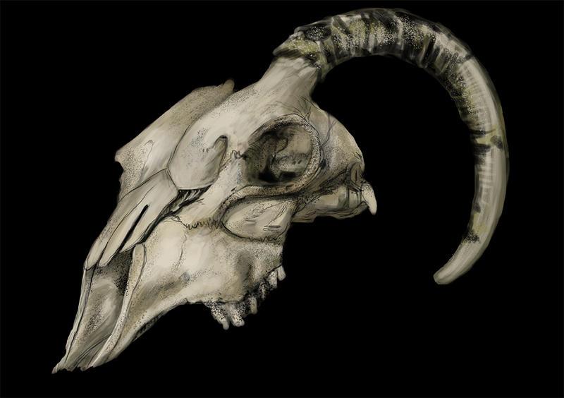 Goat Skull  3D Scan Store