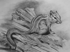 Chipmunk by Olya-N-i-k