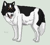 Bonnie wolf by HaloneWolf