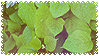 plants uwu by stampswhore