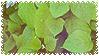 plants uwu