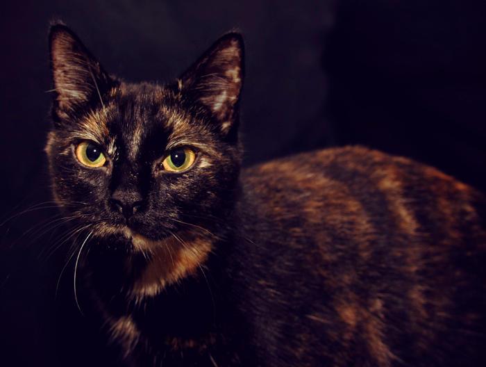 Beautiful Athena